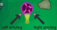 Limb directions